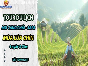 tour-du-lich-mu-cang-chai-sapa-mua-lua-chin-4-ngay-3-dem9